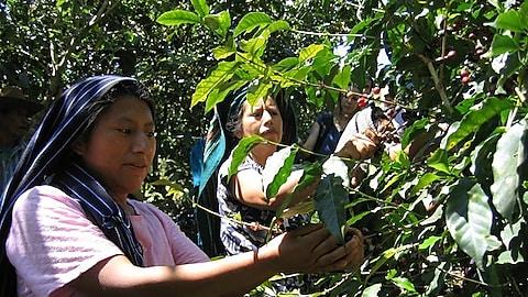 Agricultoras mexicanas productoras de café reciben un pago justo