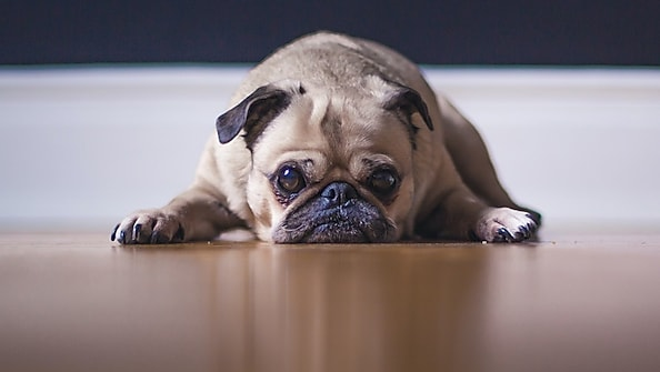 Dogs with anxiety: what you need to look out for